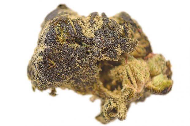 Kurupts Moonrock   Najsilniejsza Marihuana na Rynku, jamaica.com.pl