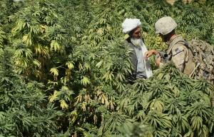 5 Krajów, w Których Marihuana Jest Najtańsza, jamaica.com.pl