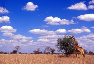 południowa-afryka-5214