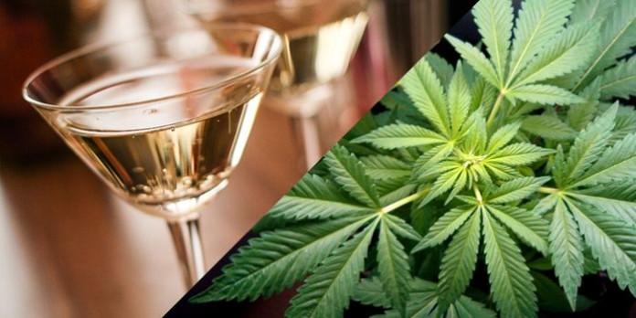 Marihuana Może Odwrócić Szkody w Mózgu Spowodowane Alkoholem, jamaica.com.pl