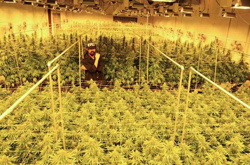 Damian Marley Zamienia Więzienie w Ogromną Plantację Marihuany, jamaica.com.pl