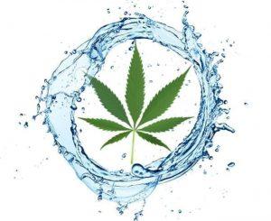 Woda deszczowa przy uprawie cannabisu, jamaica.com.pl