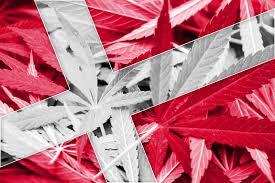 Dania: Rolnicy chcą produkować medyczną marihuanę, jamaica.com.pl
