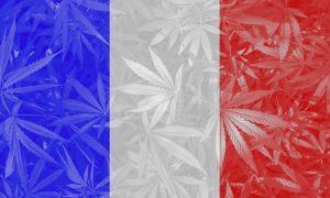 Francja: Macron zapowiada złagodzenie prawa dotyczącego cannabisu, jamaica.com.pl