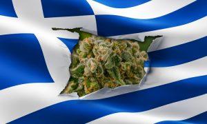 Grecja legalizuje medyczną marihuanę, jamaica.com.pl