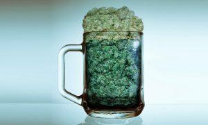 Spożywanie cannabisu może redukować przypadki przedwczesnej śmierci, jamaica.com.pl