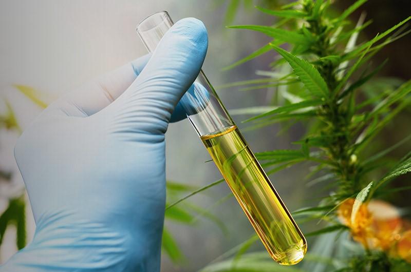 Cannabis Może Chronić Przed Koronawirusem, jamaica.com.pl