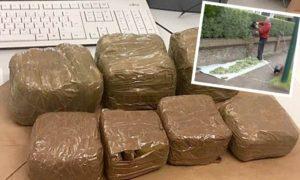 Mężczyzna znalazł 5kg haszyszu w swoim żywopłocie, jamaica.com.pl