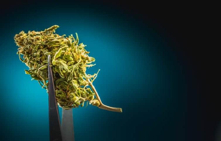 Rak Jąder i Cannabis Jako Lekarstwo, jamaica.com.pl