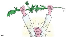 Michigan głosuje nad legalizacją marihuany, jamaica.com.pl