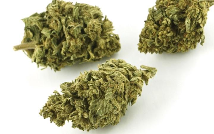 Niemiecka Partia SPD Chce Legalizacji Cannabisu, jamaica.com.pl